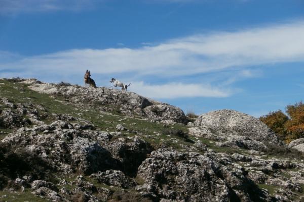 Aventura senderismo con perros excursionismo canino | Aventuras con Botas